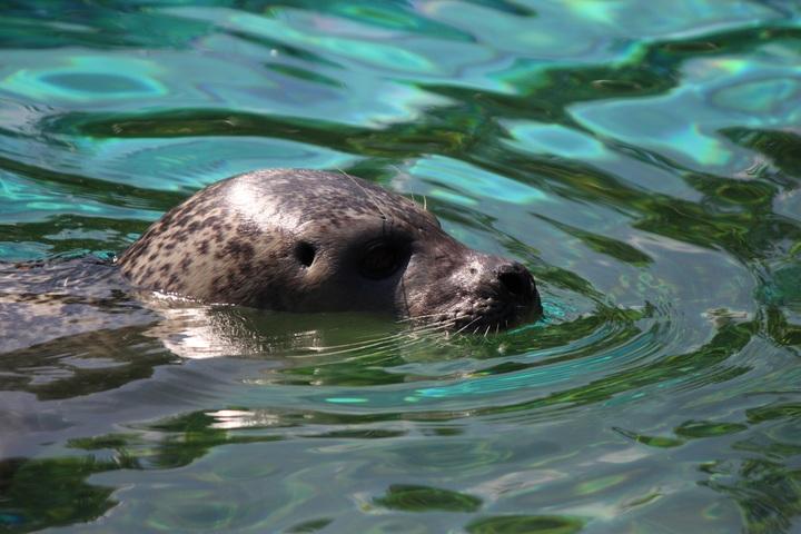 mammifère marin